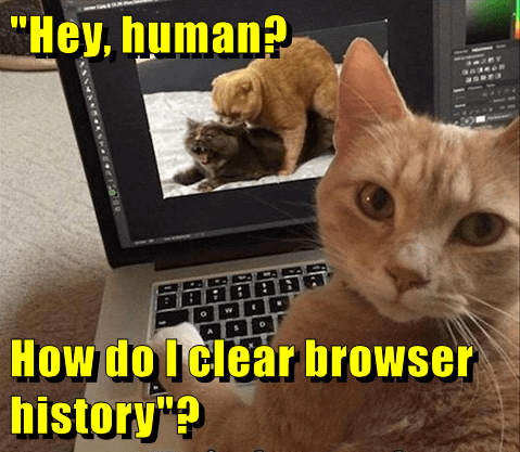 """Hey, human?  How do I clear browser history""?"