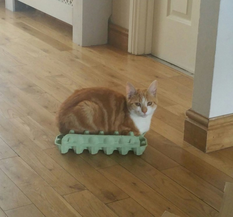 Cats caterpillar - 8821426688