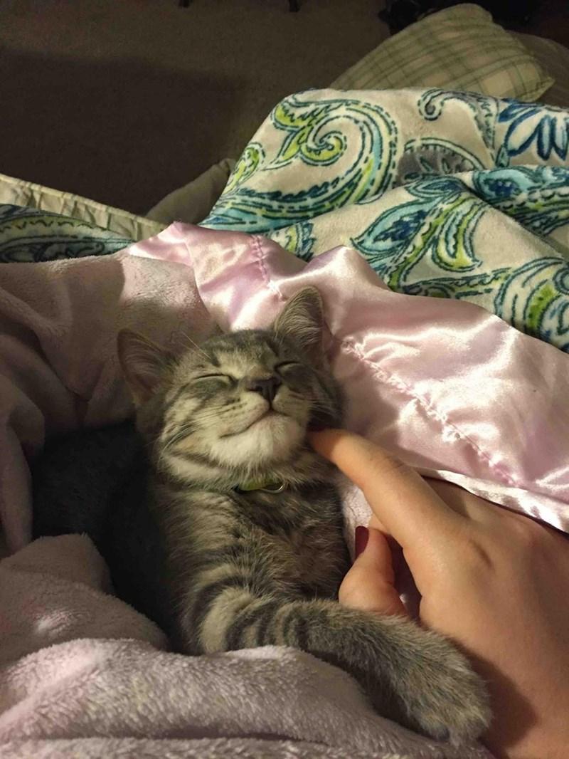 scratch,Cats
