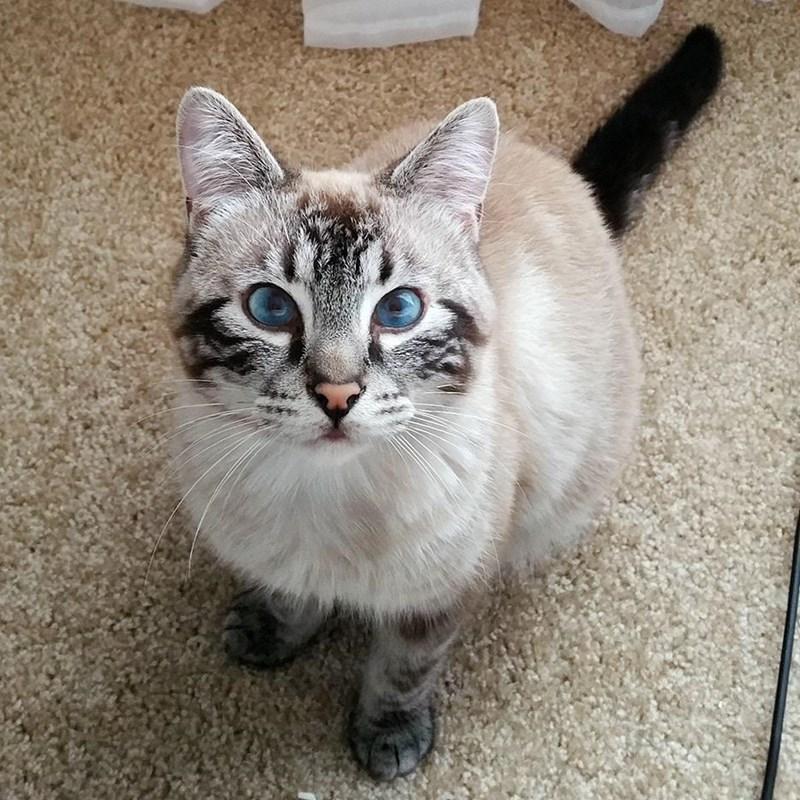eyes Cats - 8821517568