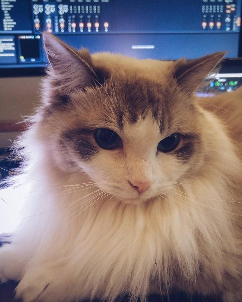 floof Cats - 8821522176