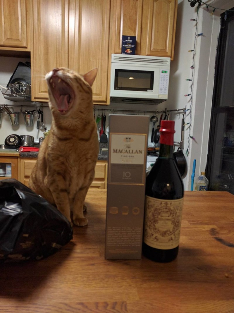roar,Cats