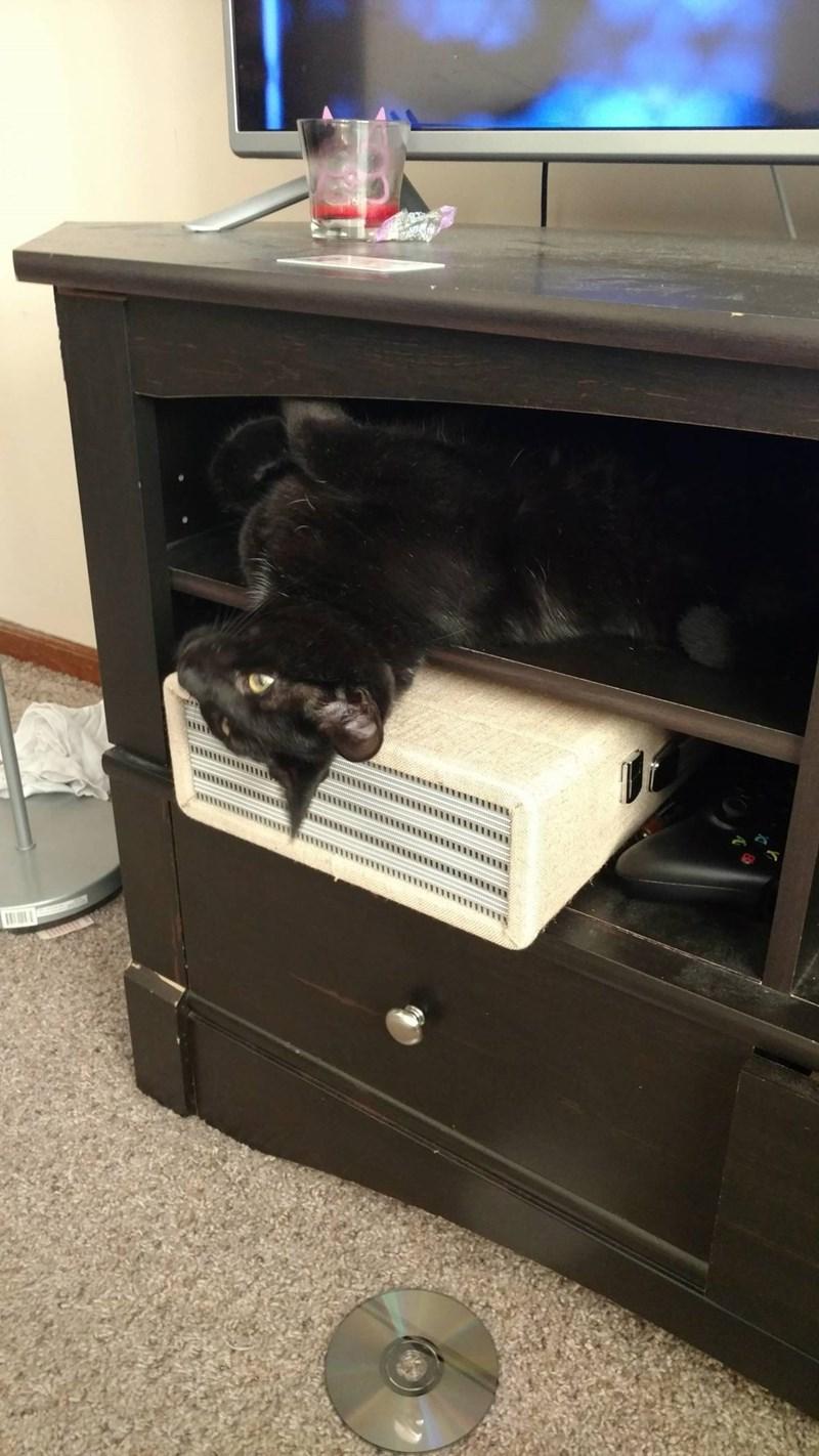 TV Cats - 8821545984