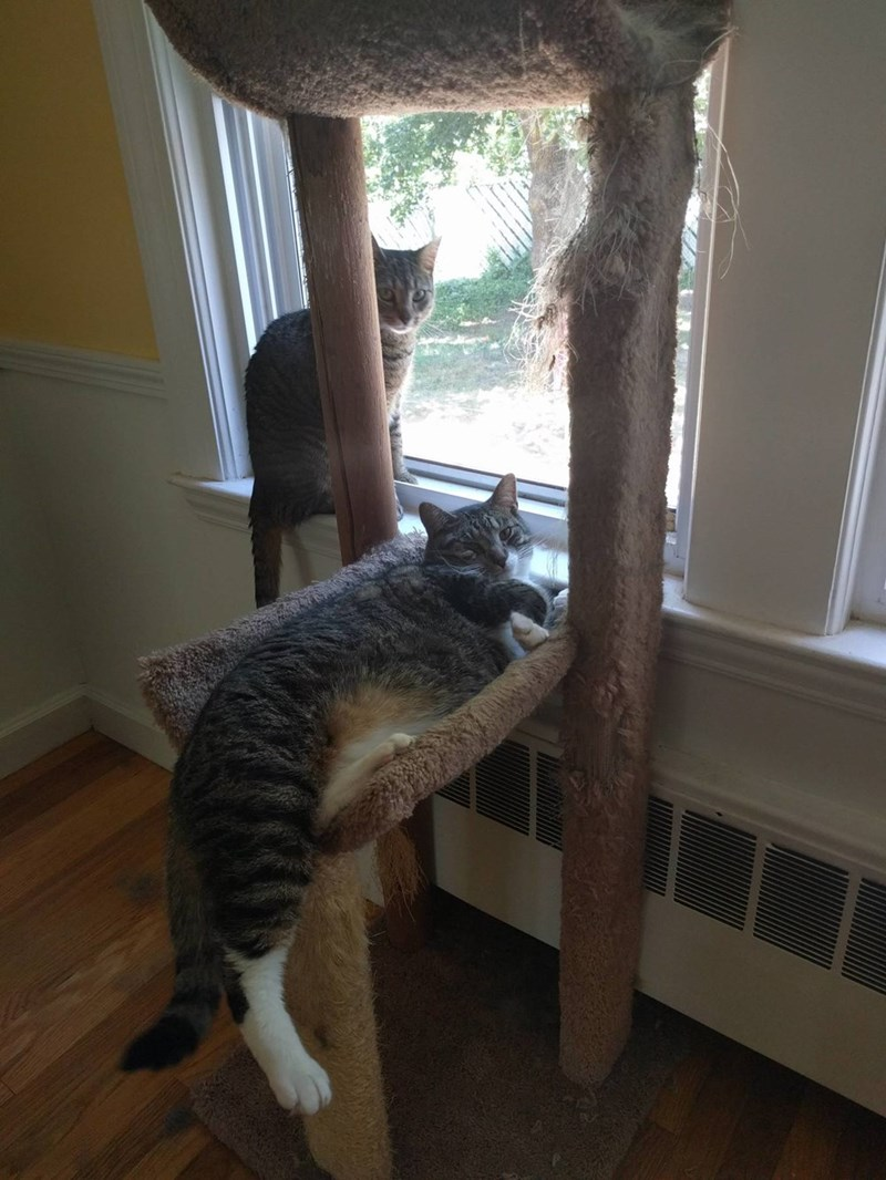 lounging Cats - 8821551872