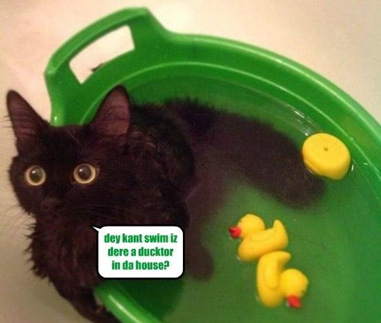 dey kant swim iz dere a ducktor in da house?
