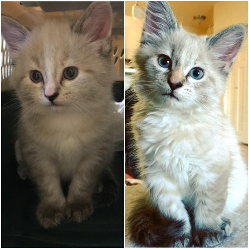 kitten Cats - 8821565440