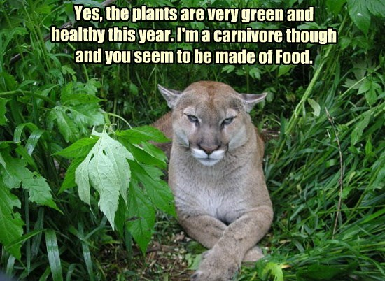 Yes, the plants are very green and healthy this year. I'm a carnivore though and you seem to be made of Food.