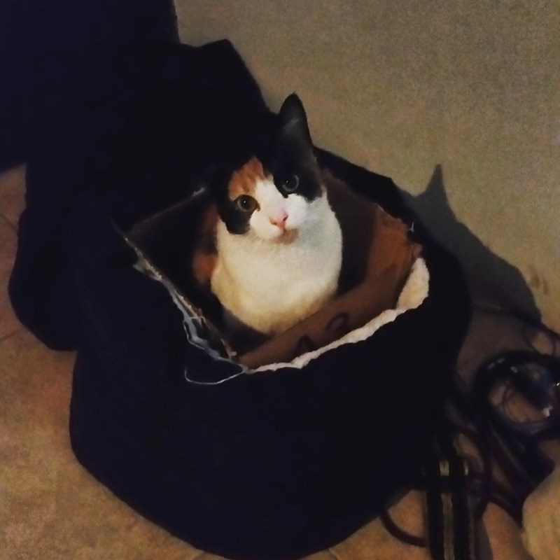 bed box Cats - 8821627392