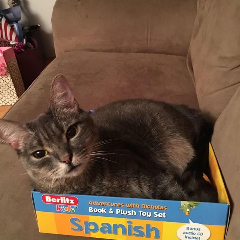 spanish,Cats