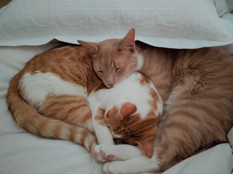 snuggle Cats - 8821670912