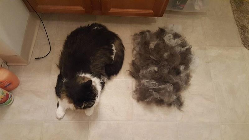 hair Cats - 8821684224