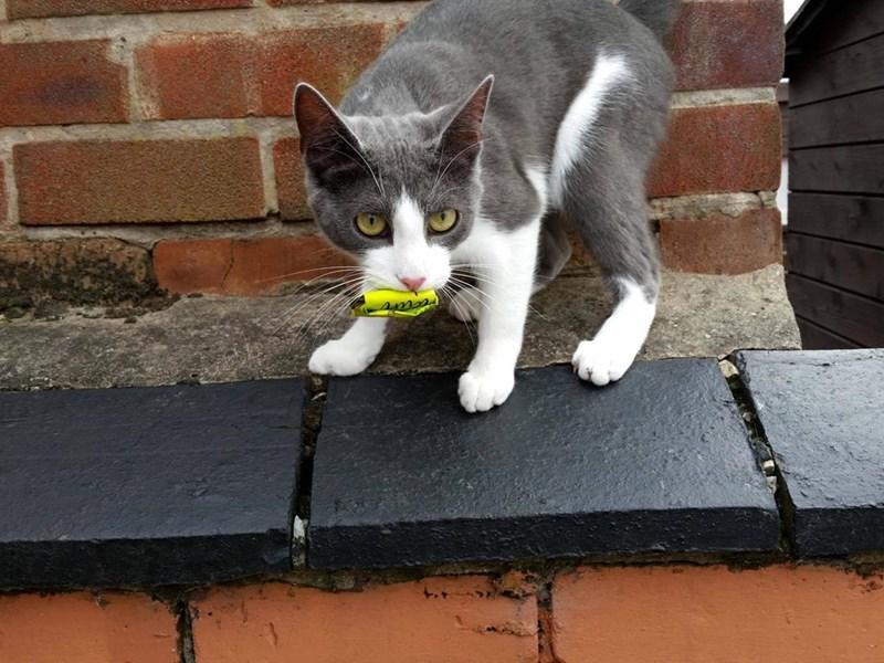 Cats crisp - 8821702912