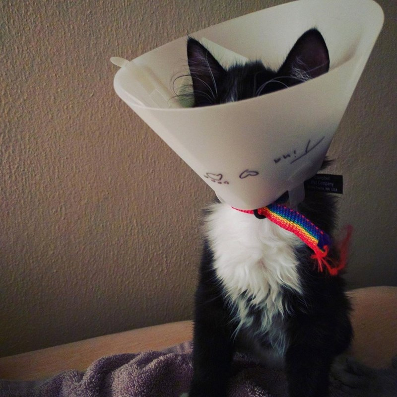 cone of shame Cats - 8821714688