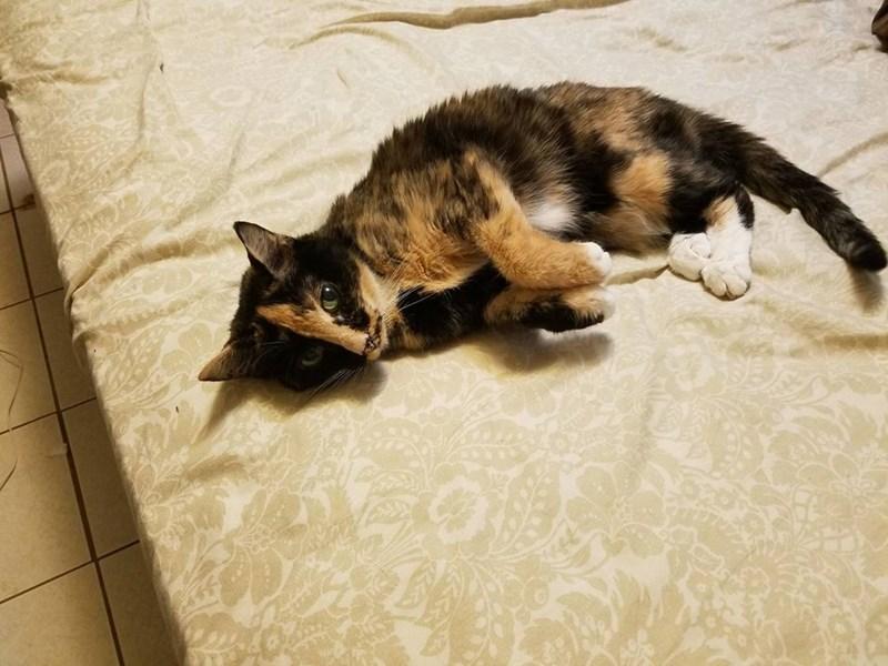 Cats lady - 8821714944