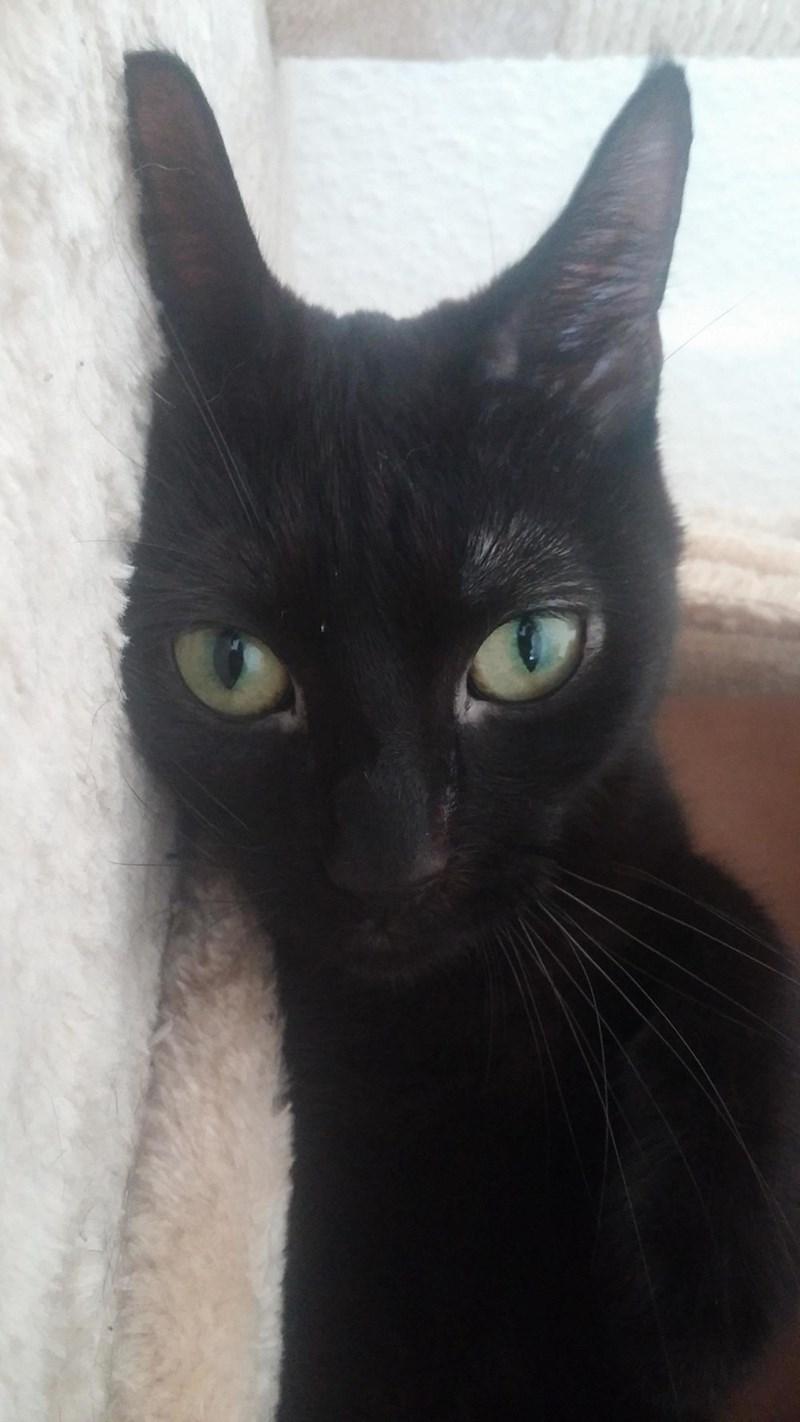 Cats bat - 8821717760