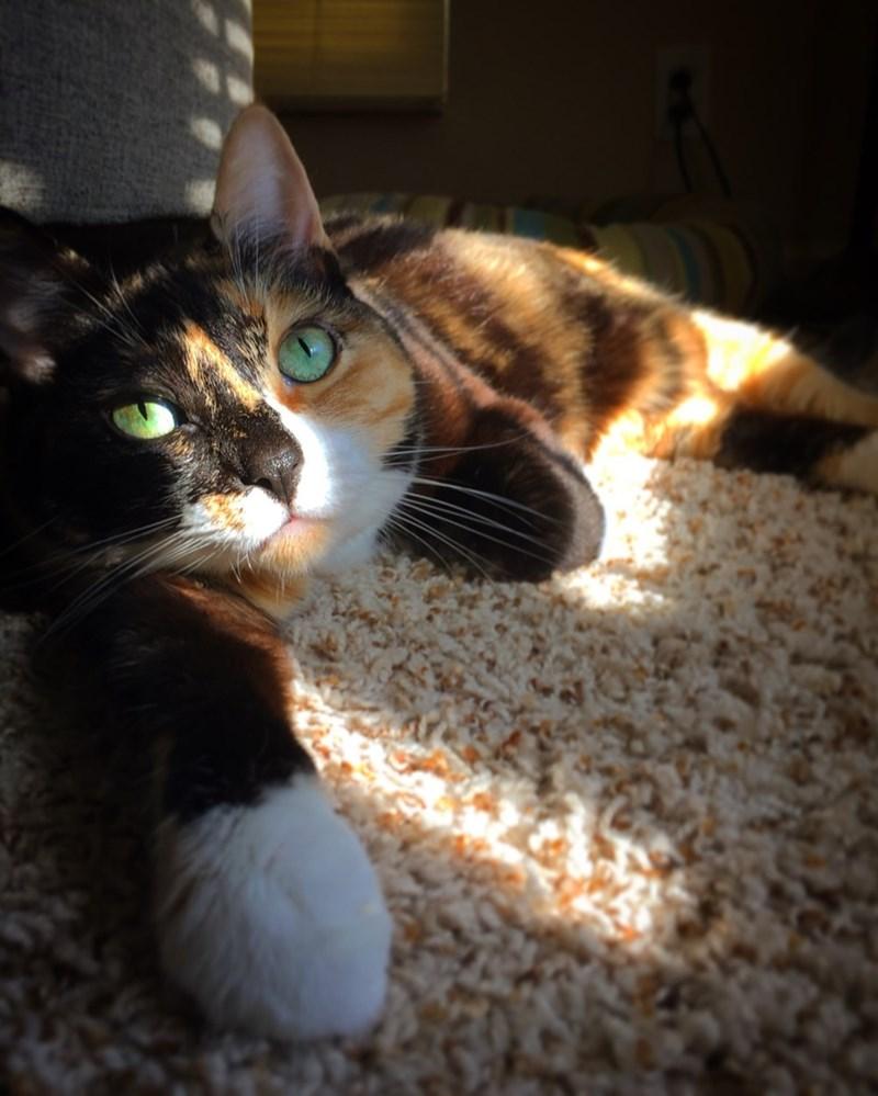 sun,Cats