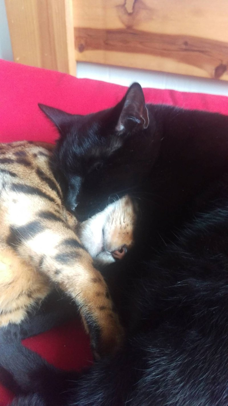cuddle Cats - 8821740288