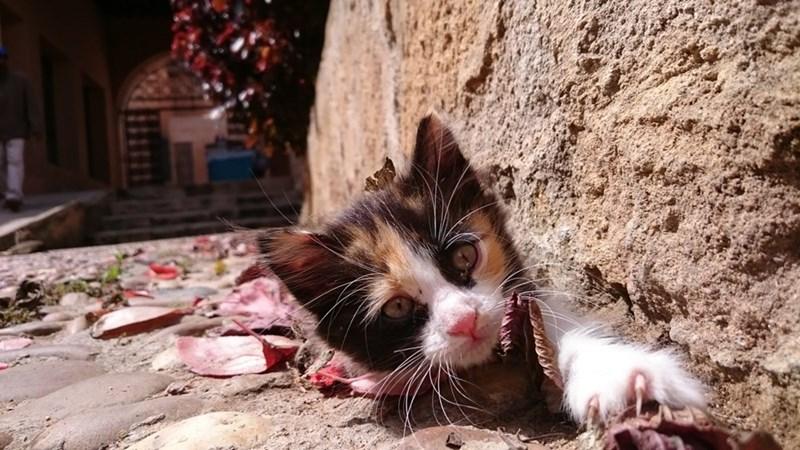 kitten Cats - 8821740544
