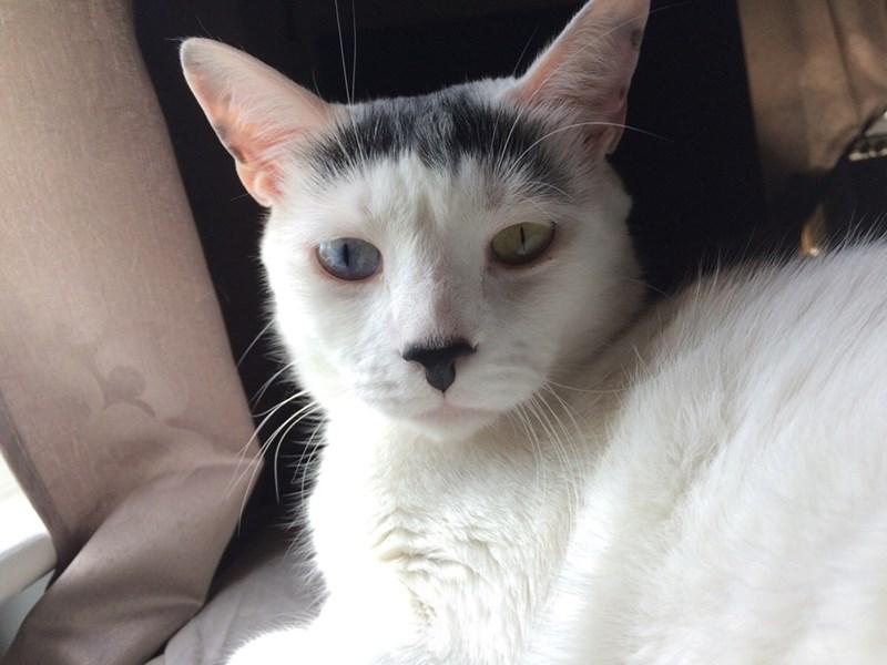 eyes Cats - 8821742848