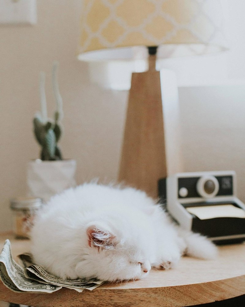 Cats sleeping - 8821743104