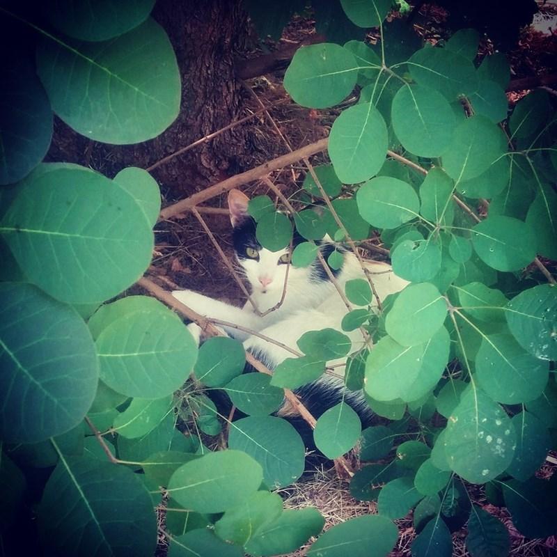 summer Cats - 8821762304