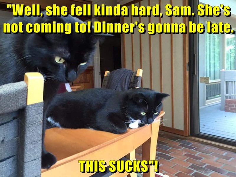 """Well, she fell kinda hard, Sam. She's not coming to! Dinner's gonna be late.  THIS SUCKS""!"