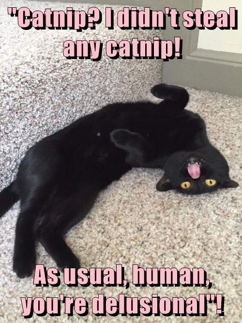 """""""Catnip? I didn't steal any catnip!  As usual, human, you're delusional""""!"""