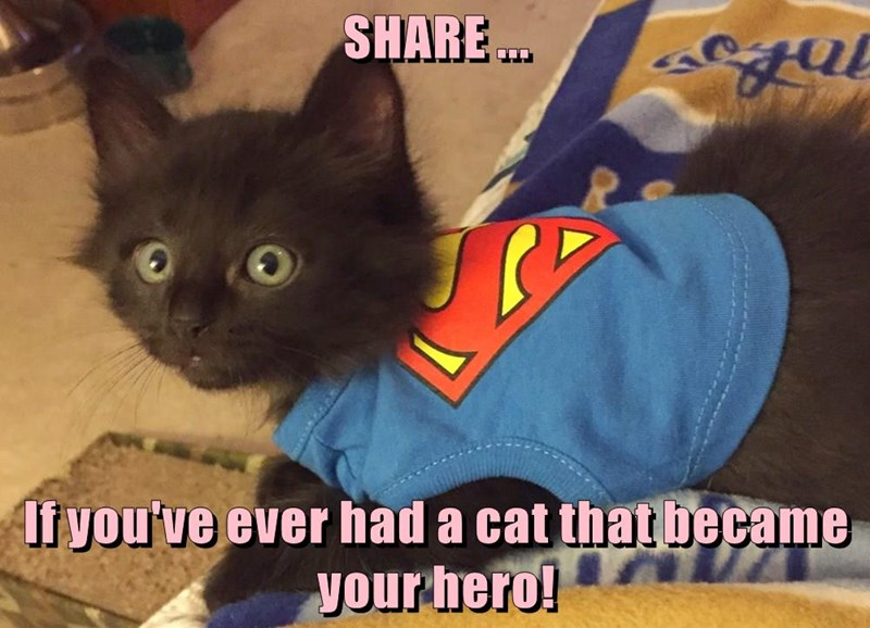 hero,cat,share,kitten,caption,became