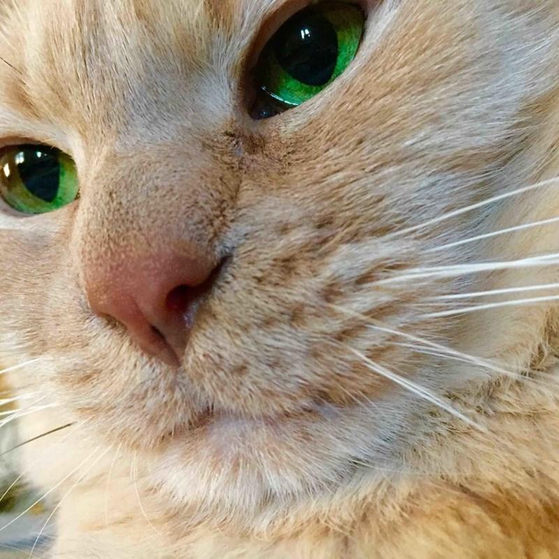 eyes Cats - 8821787904