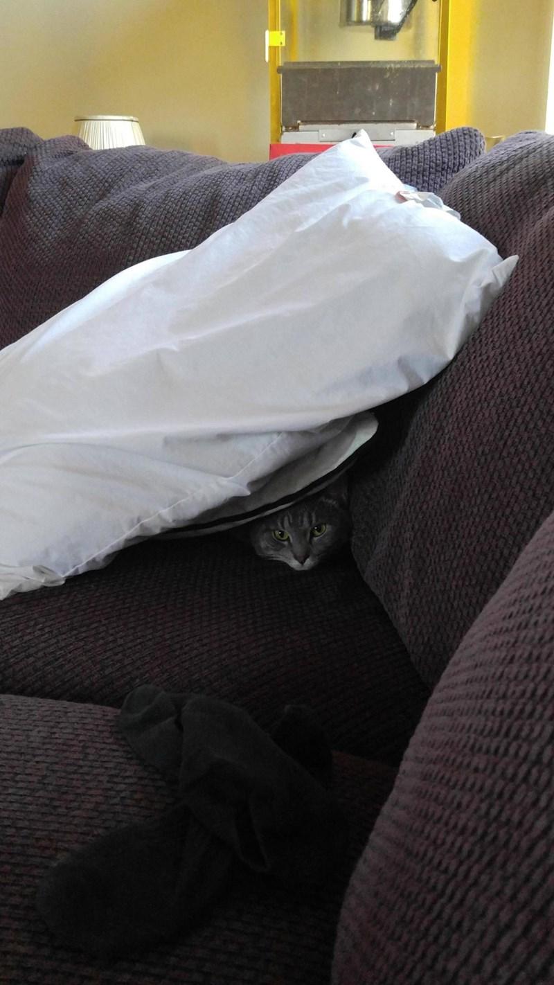 Pillow Cats - 8821788160