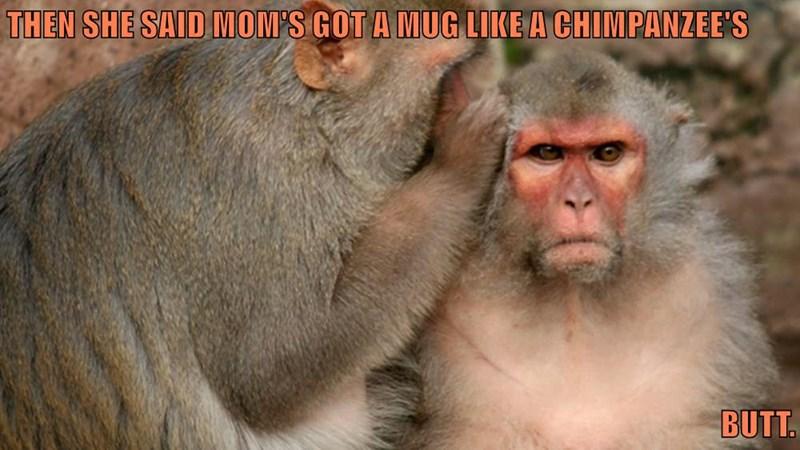 THEN SHE SAID MOM'S GOT A MUG LIKE A CHIMPANZEE'S  BUTT.