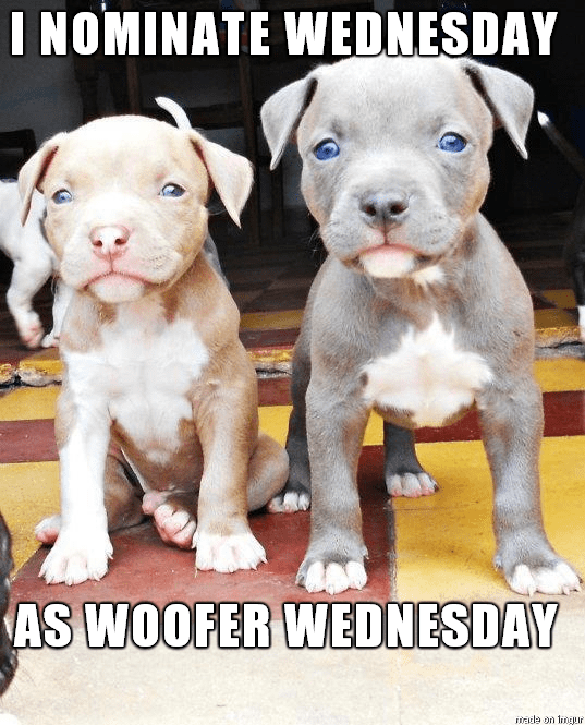 dogs wednesday caption - 8821821952