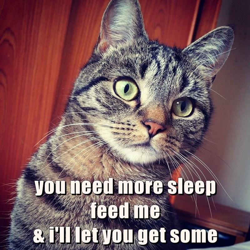 animals cat me feed sleep caption need - 8821863680