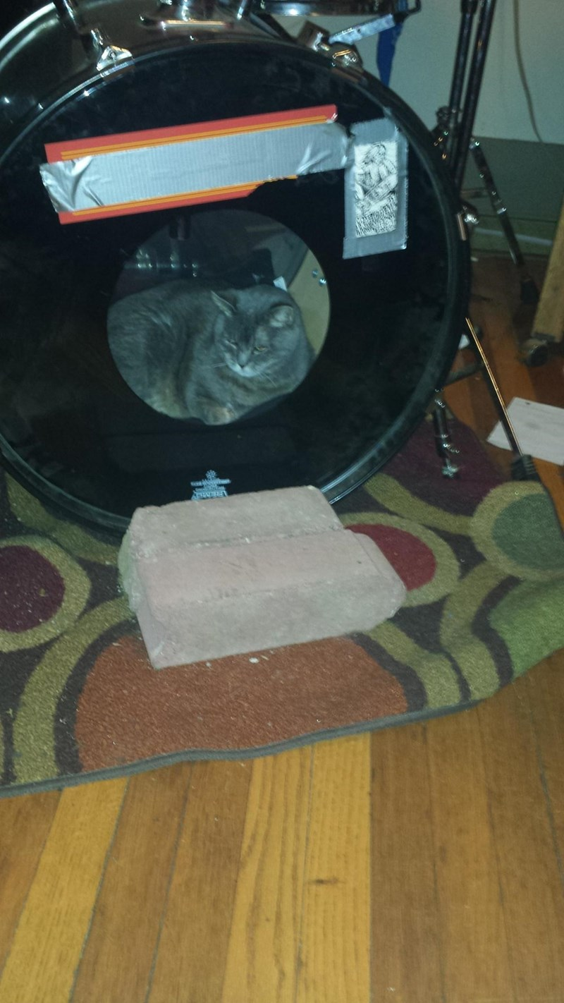 Cute picture of a cat chilling out in a large drum from a proper drum-set