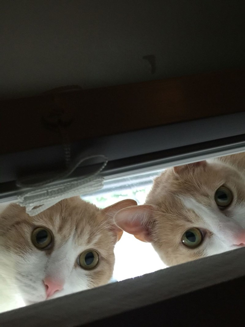 creepy,twins,Cats
