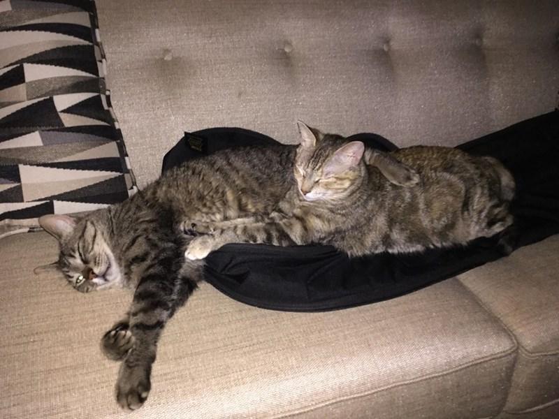 cuddle Cats - 8821912832