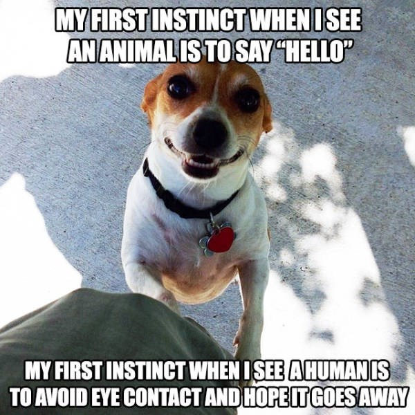my first instinct when i see an animal is to say hello