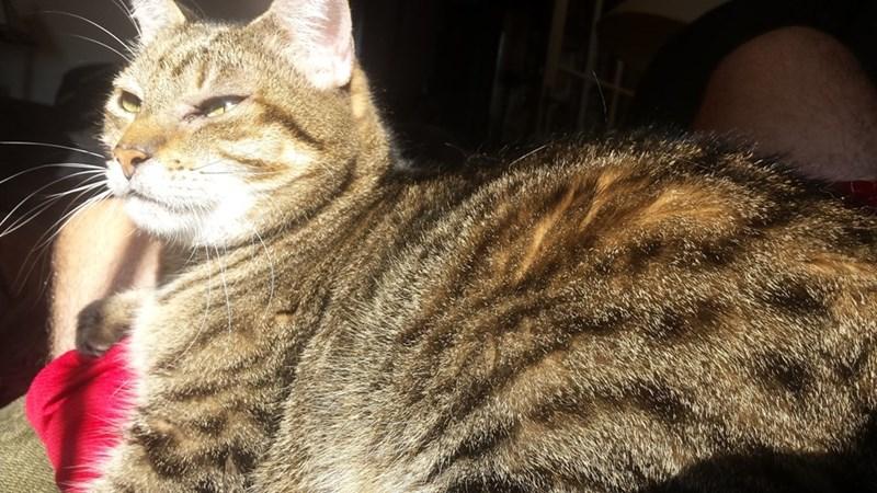 sunlight Cats - 8821932544