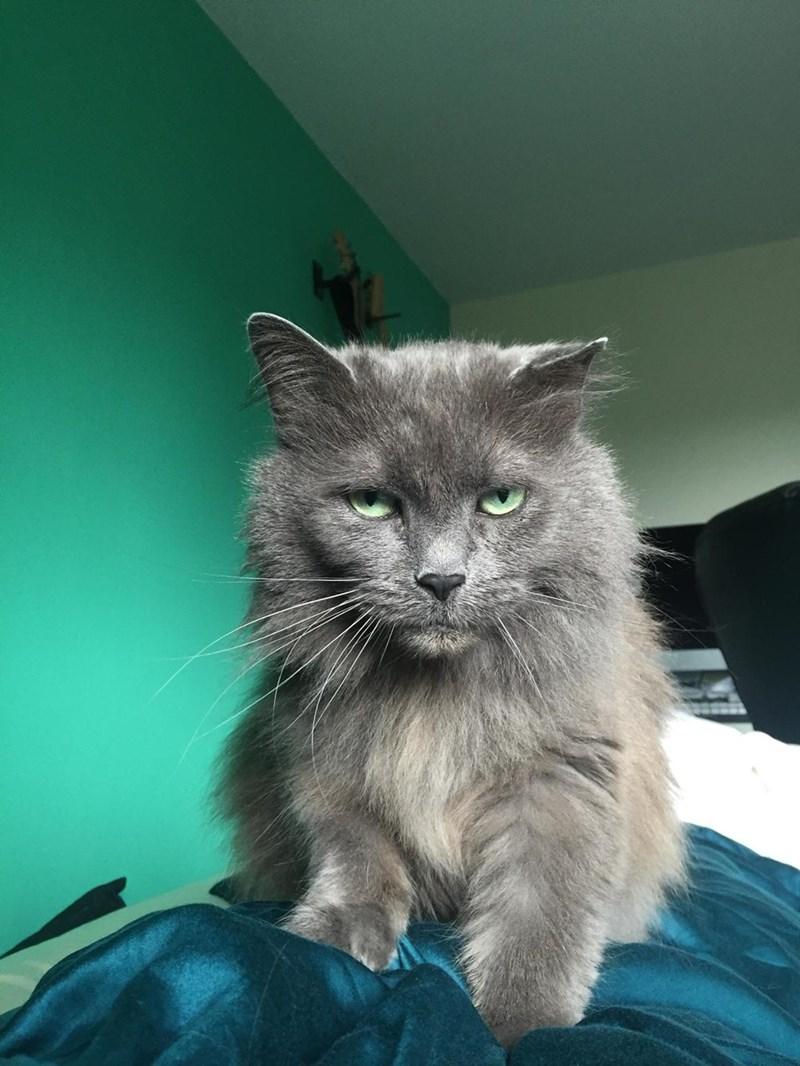 eyes Cats - 8821944064