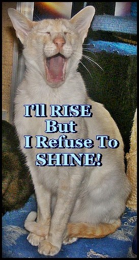 I'll RISE But I Refuse To SHINE!