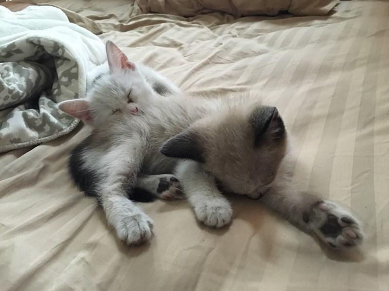 kitten Cats - 8821967104