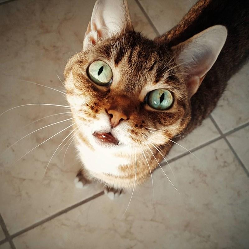 eyes Cats - 8821967360