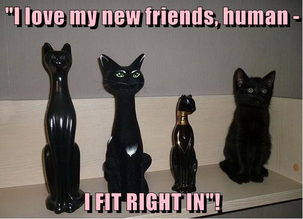 """""""I love my new friends, human -  I FIT RIGHT IN""""!"""