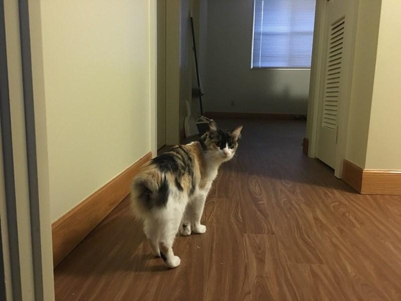 suspicious Cats - 8821986560