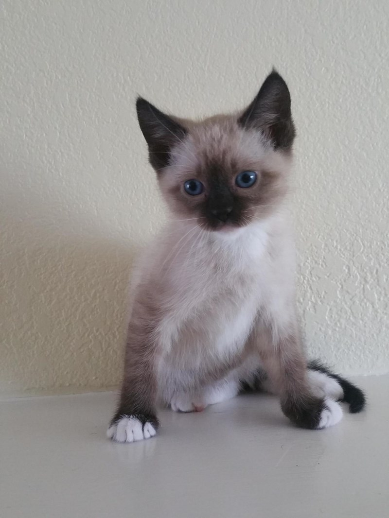 kitten Cats - 8821986816