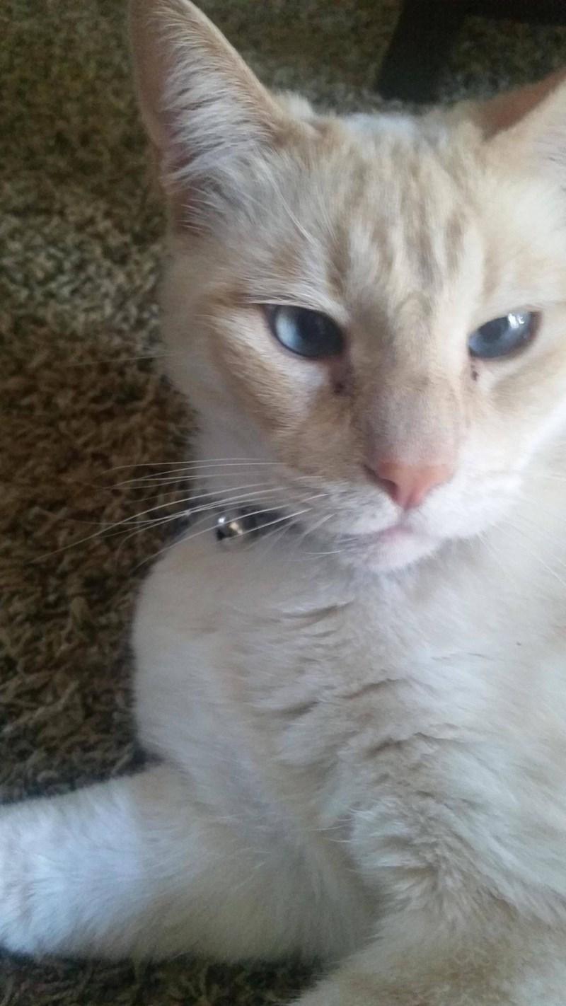 eyes Cats - 8821987328