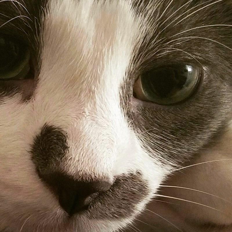 close up Cats - 8822003712