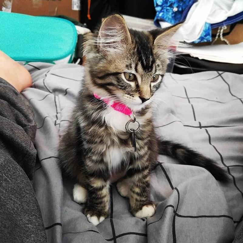 kitten Cats - 8822004480