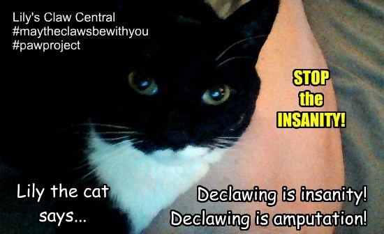 declawing insanity!