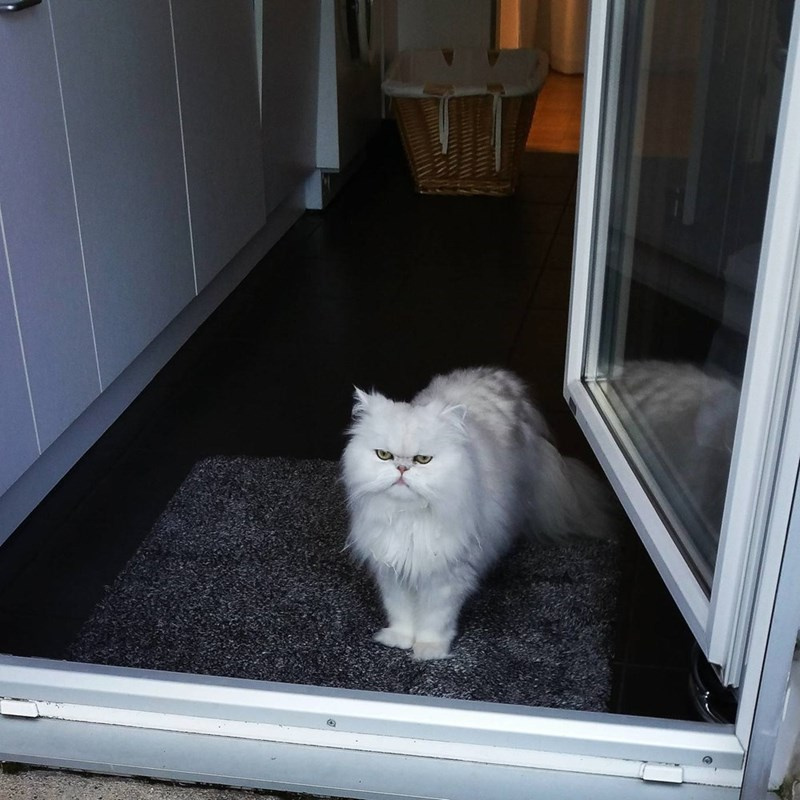 floof Cats - 8822029312